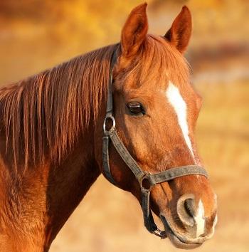 horse-1201143_1280